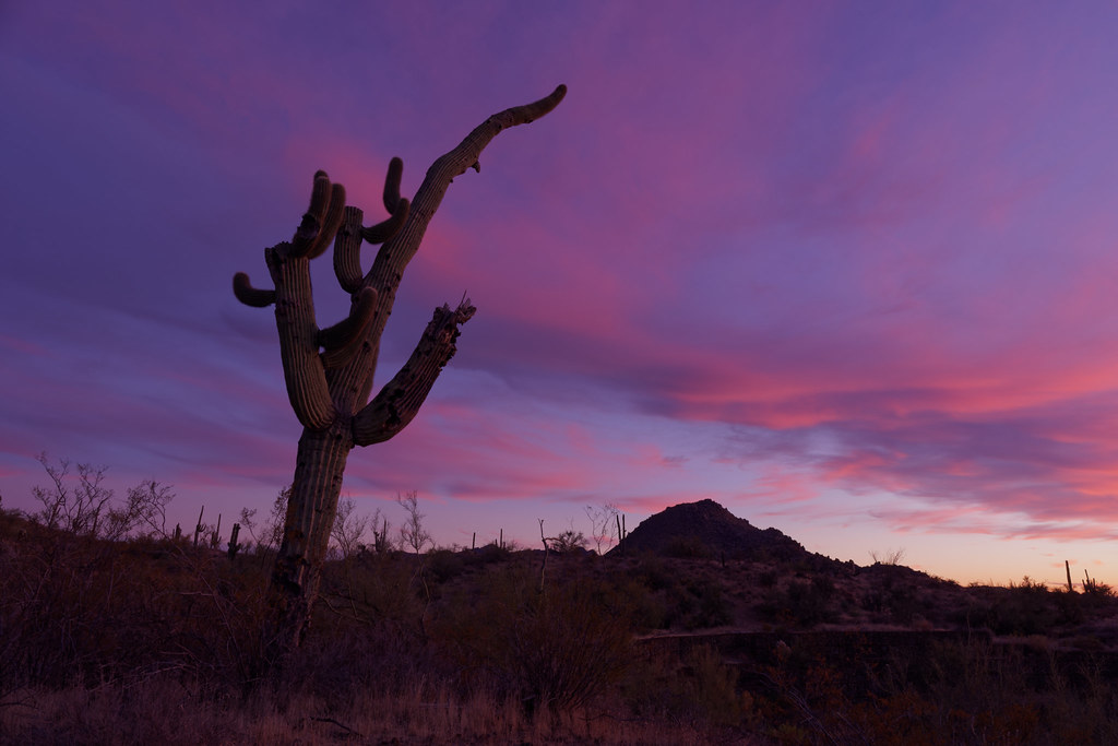 A tall leaning cactus sits in front of pink clouds at sunset at George Doc Cavalliere Park in Scottsdale, Arizona on December 13, 2020. Original: _CAM7581.arw