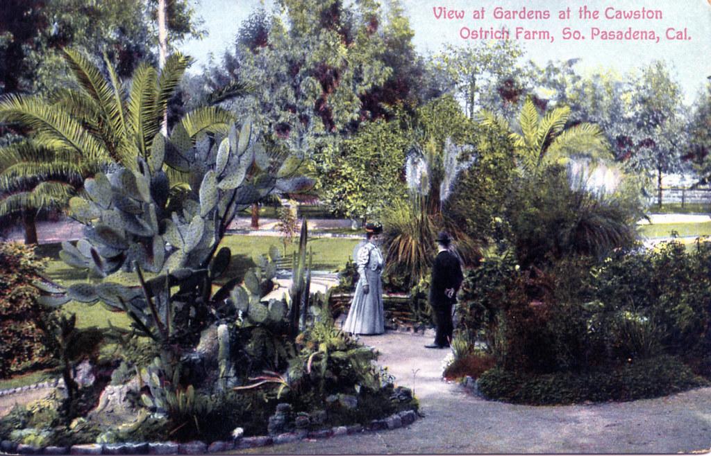 View at Gardens at the Cawston Ostrich Farm South Pasadena CA