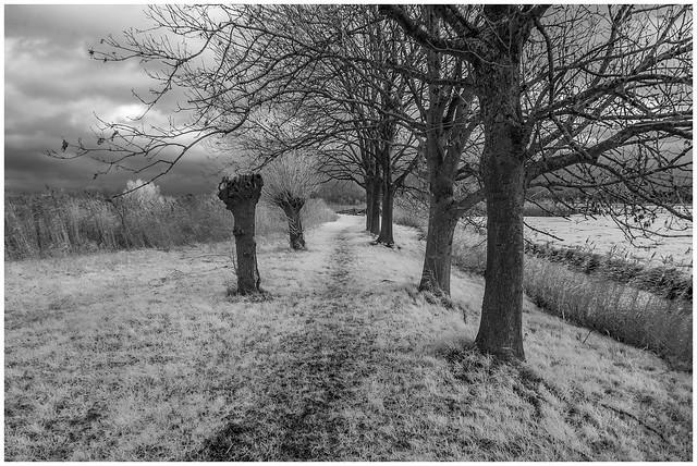 Winter, but no snow - DSC00038.jpg