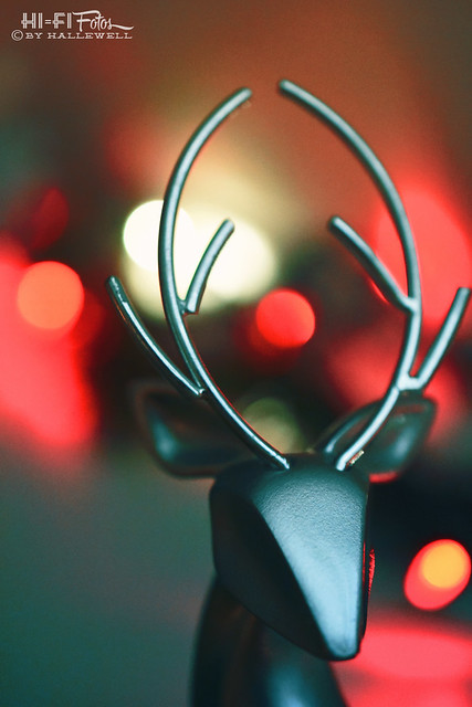 Deer in the twinkle lights
