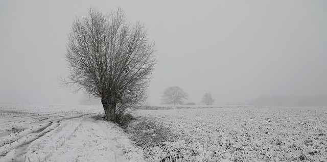 Winterimpression - Haasdonk - Belgium