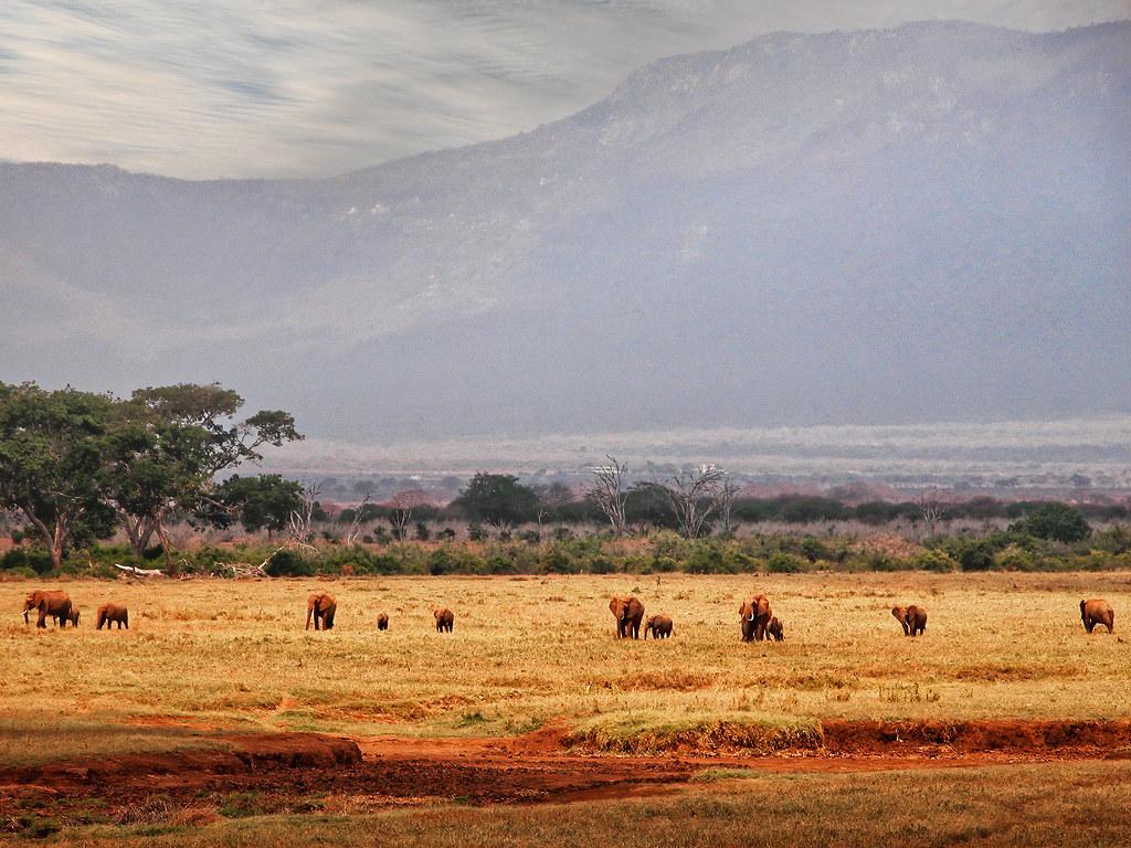 Les élephants rouges de Tsavo... 50746850248_1f48158f51_b