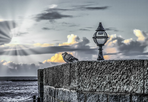 lamp d850 nikon nature dawn sea dorset ocean morning lymeregis cloud bird water sun sunbeam wall goldenhour sunray pidgeon england unitedkingdom