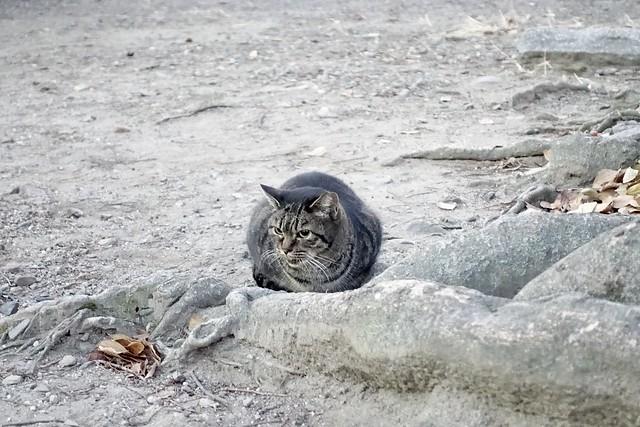 Today's Cat@2020−12−22