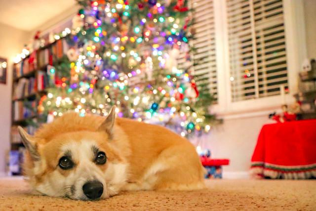 12.20.2020_Christmas_Kayleigh.15
