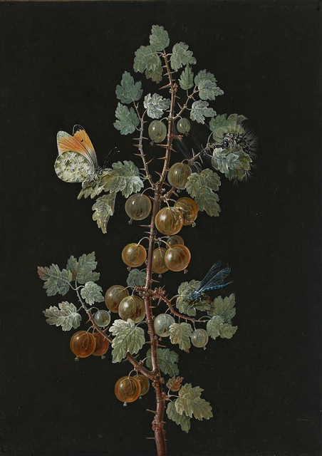 Barbara Regina Dietzsch (1706-1783) - A Branch of Gooseberries with a Dragonfly, an Orange-Tip Butterfly, and a Caterpillar