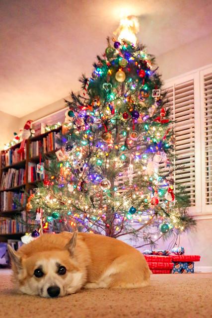 12.20.2020_Christmas_Kayleigh.07