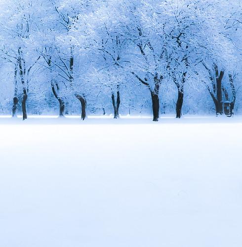 tree treeline maple snow landscape nature woods snowfall winter muses wisconsin trees field