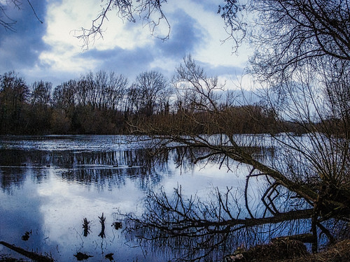 landscape nature lake water trees woods woodland bush branches bare gnarly winter cold dark lakescape sky clouds reflections berkshire thamesvalley loddon twyford charvil wokingham reading england britain uk sony cybershot t100 lightroom photoshop topaz ai denoise sharpen skylum luminar