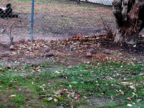 a flock of 16 mourning doves