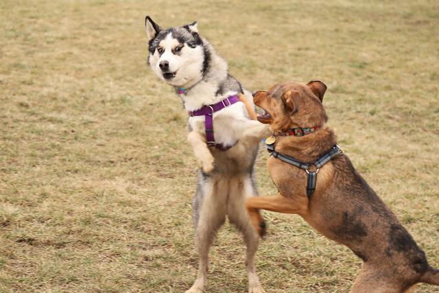 Visit with Runyon to Swift Run Dog Park (Ann Arbor, Michigan) - December 22nd, 2020