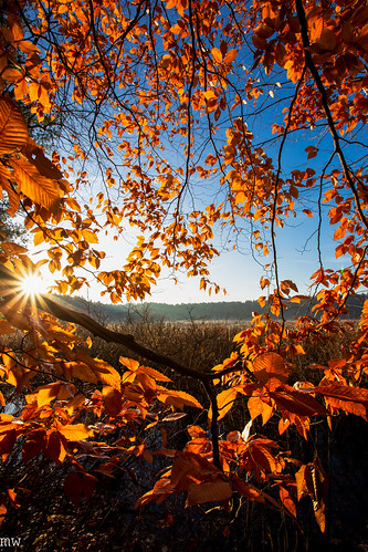 westford massachusetts russell bird sanctuary trail hiking fall nature landscape leaves foliage