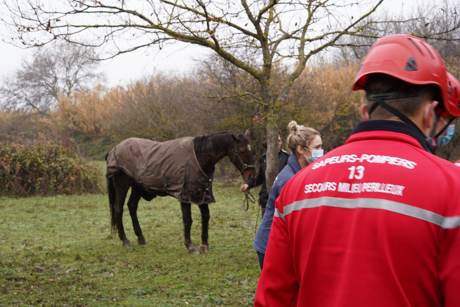 Sauvetage d'un cheval à Châteauneuf-les-Martigues