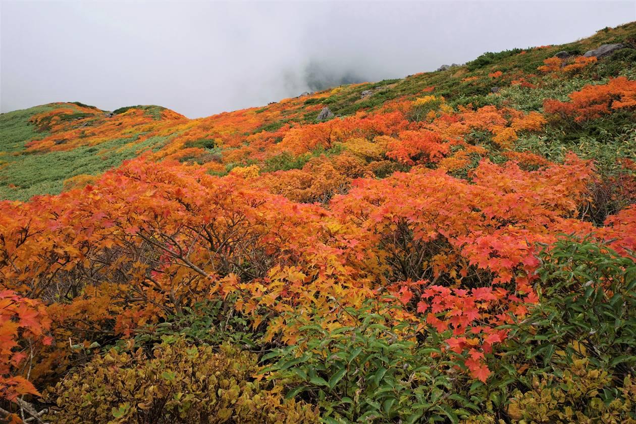 【東北】月山の紅葉