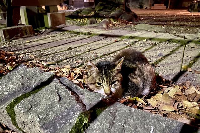 Today's Cat@2020−12−23
