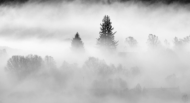 Trees & Mist: Spean Bridge