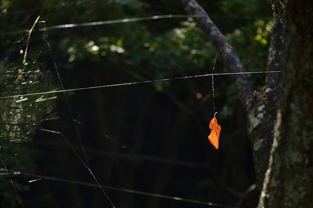 蜘蛛の糸と枯れ葉