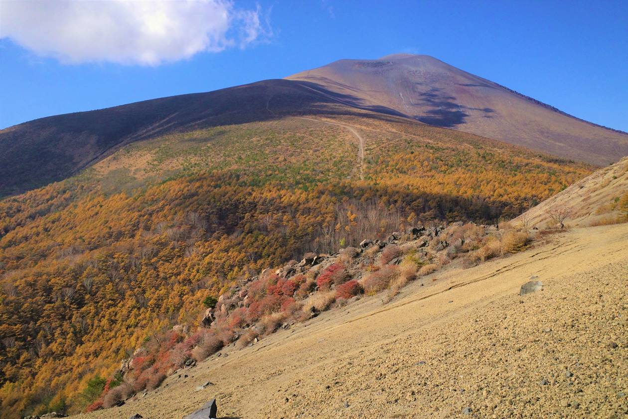 小浅間山から眺めるカラマツの紅葉と浅間山