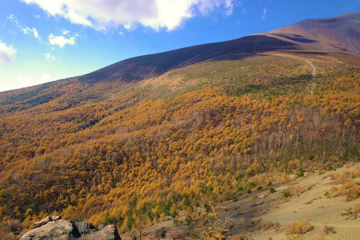 小浅間山から眺めるカラマツの紅葉
