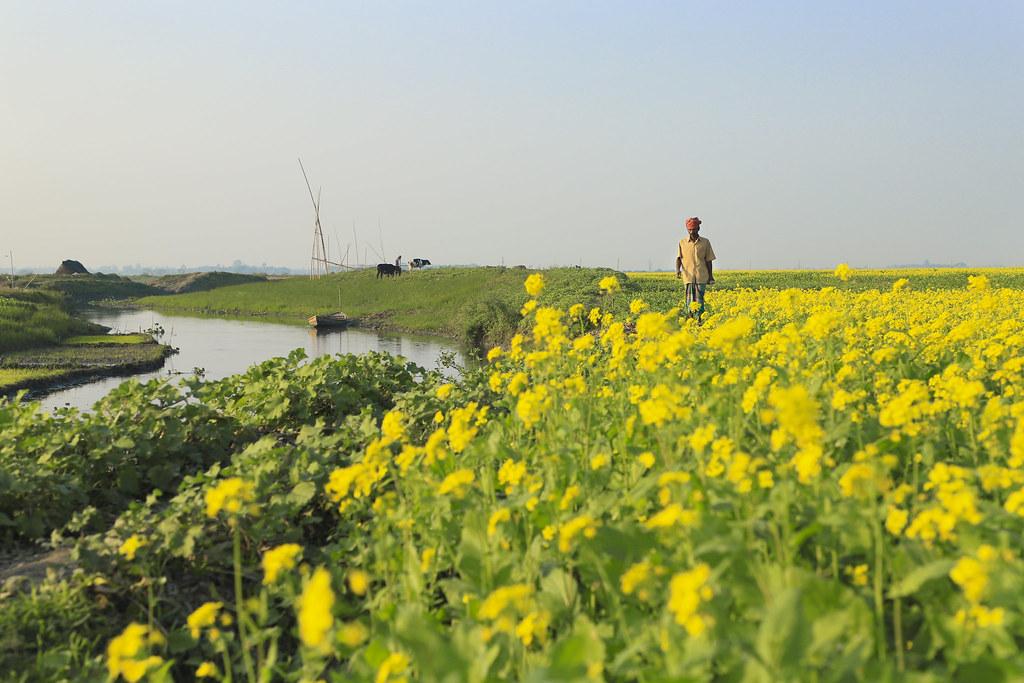 Landscape Bangladesh