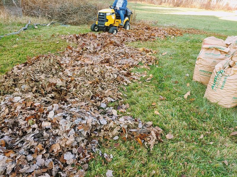 Mulching the autumn leaves