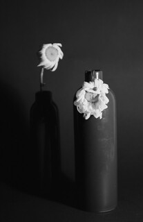still life with withered daisies film | by Alena Shminke