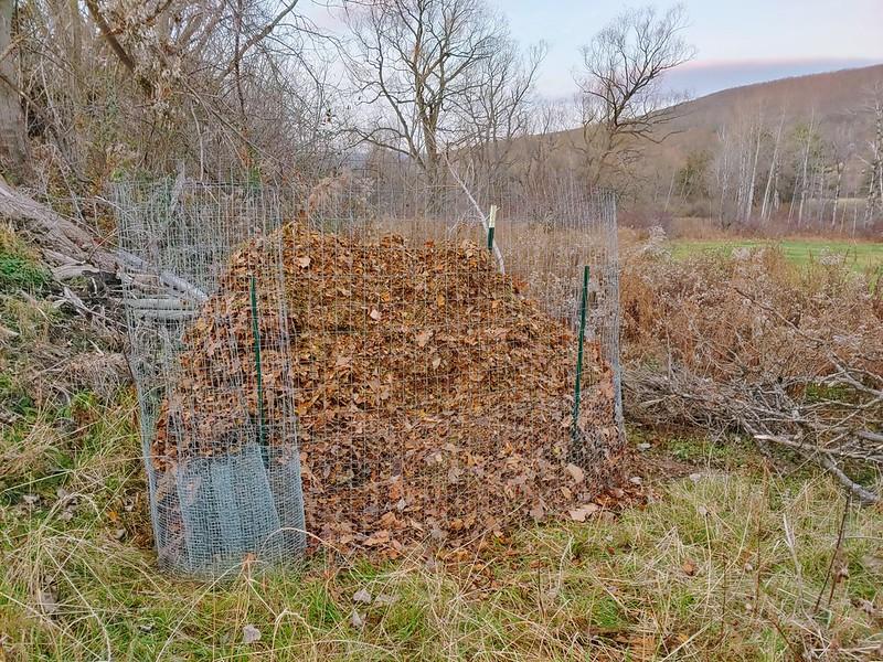 Pile of shredded leaves for mulch!