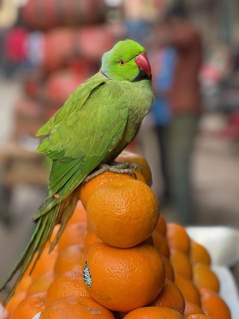 Mission Delhi - Katto, Matia Mahal