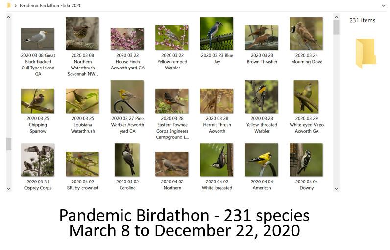 2020 03 08 Pandemic Birdathon