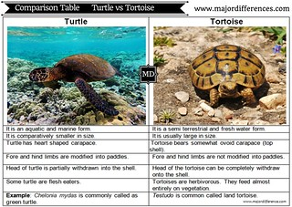 TurtlesNotTortoises