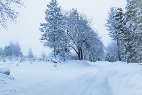 winterlandscape california landscape nevadacity sierranevadafoothills cementhilroad lightroom6 canonef24105mmf4lisusm topazstudio canon5dmarkiii winter nevadacounty snowyday