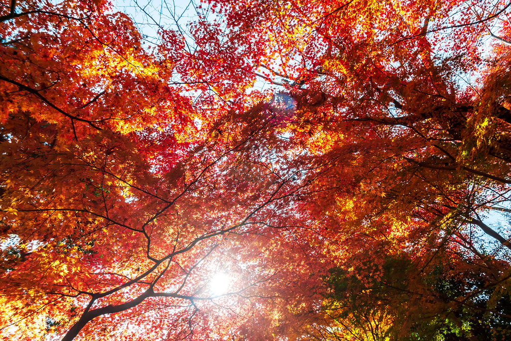 Autumn leaves at Hase-dera Temple : 長谷寺紅葉