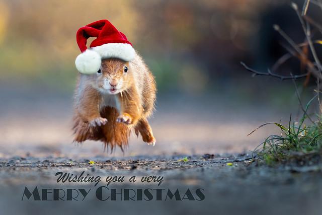 MERRY CHRISTMAS (in-explore-2020-12-24)