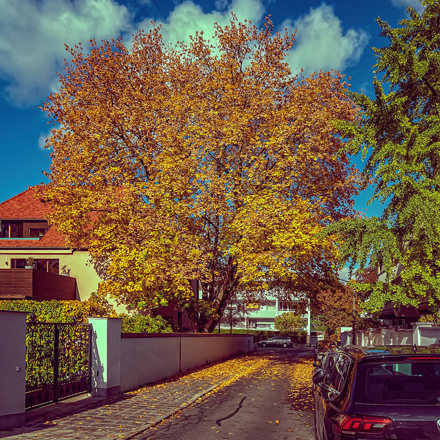 Autumn Tree IV