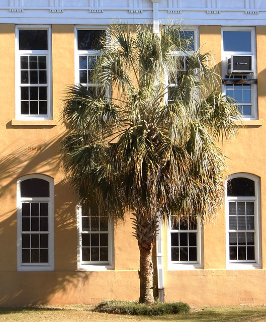 palmetto and wall