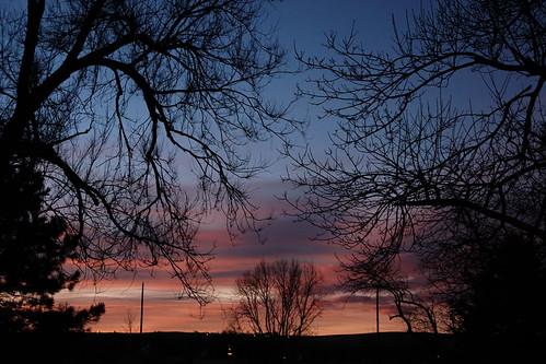sunrise silhouette tree trees sky