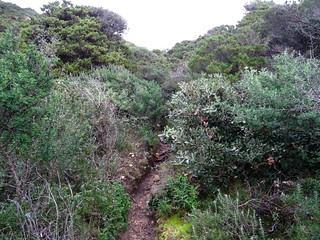 Le sentier de remontée vers Ciappili