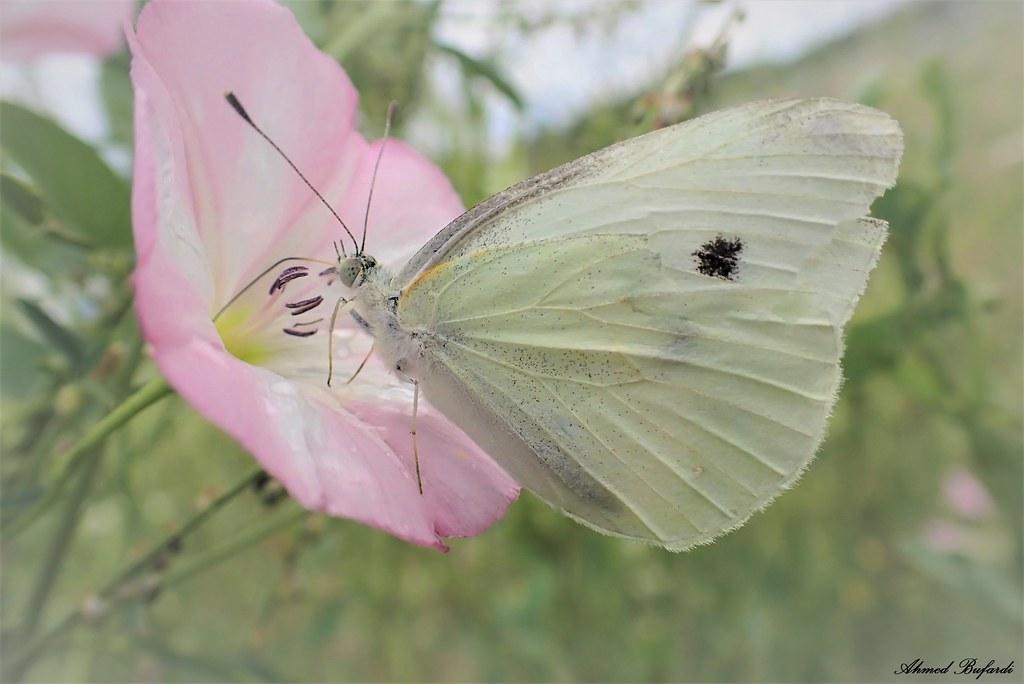 Butterfly 2029