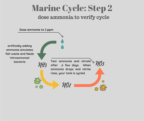Saltwater Aquarium Cycle Step 2 Dose Ammonia to Confirm Cycle