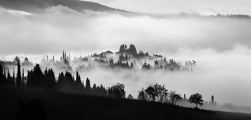 Fields of Frescobaldi family, above Pontassieve, Tuscany