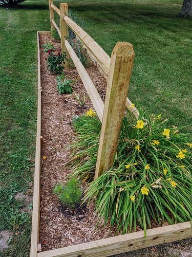 Fence garden in bloom, year 2