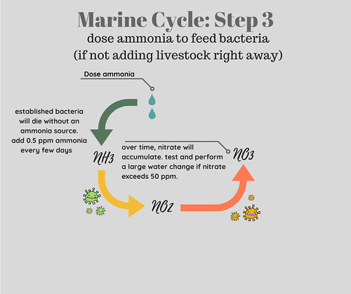 Saltwater Aquarium Cycle Step 3 Feed Beneficial Bacteria with Ammonia