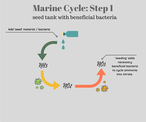 Saltwater Aquarium Cycle Step 1 Seed Tank with Beneficial Bacteria