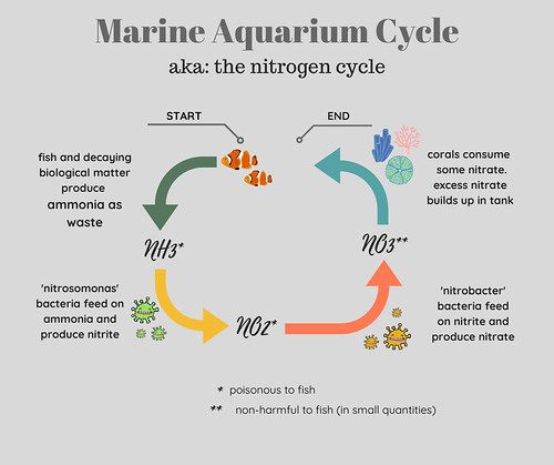 Marine Aquarium Cycle Diagram