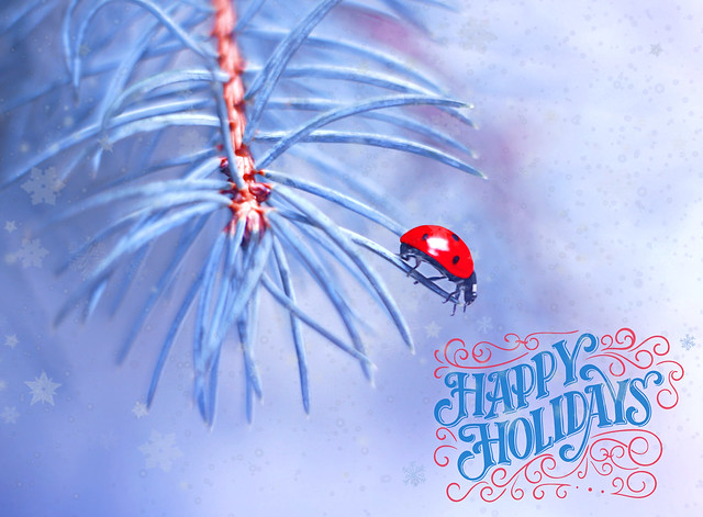 Happy holidays)))))))))