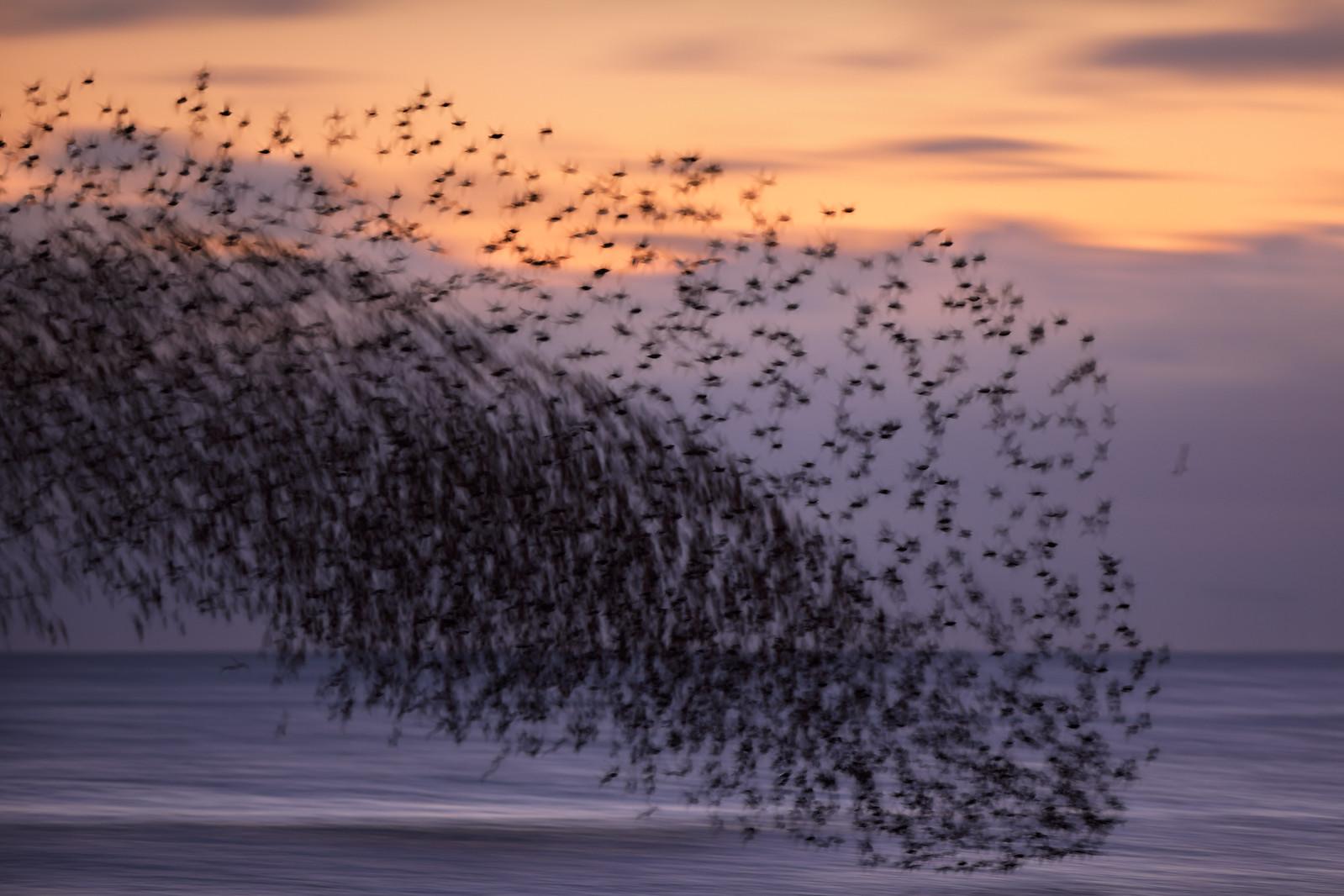 Brighton Starling Murmuration - Motion Blur