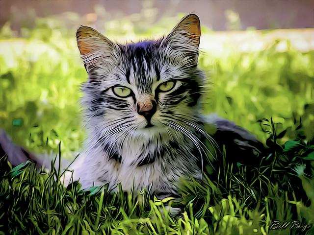 Feline in the Grass