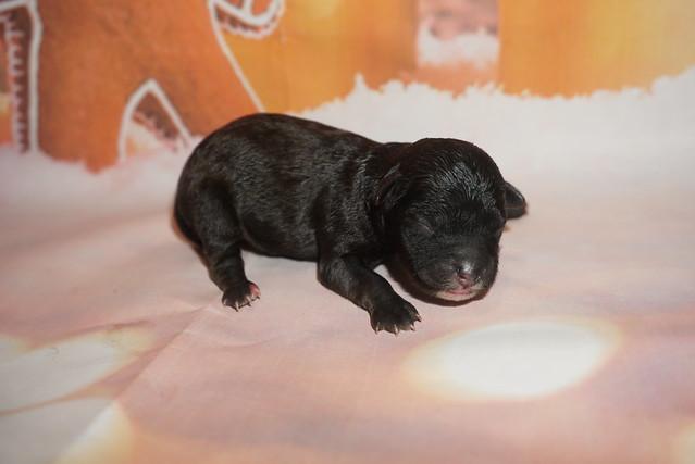 1 Rose 5.4oz 1 day old (11)