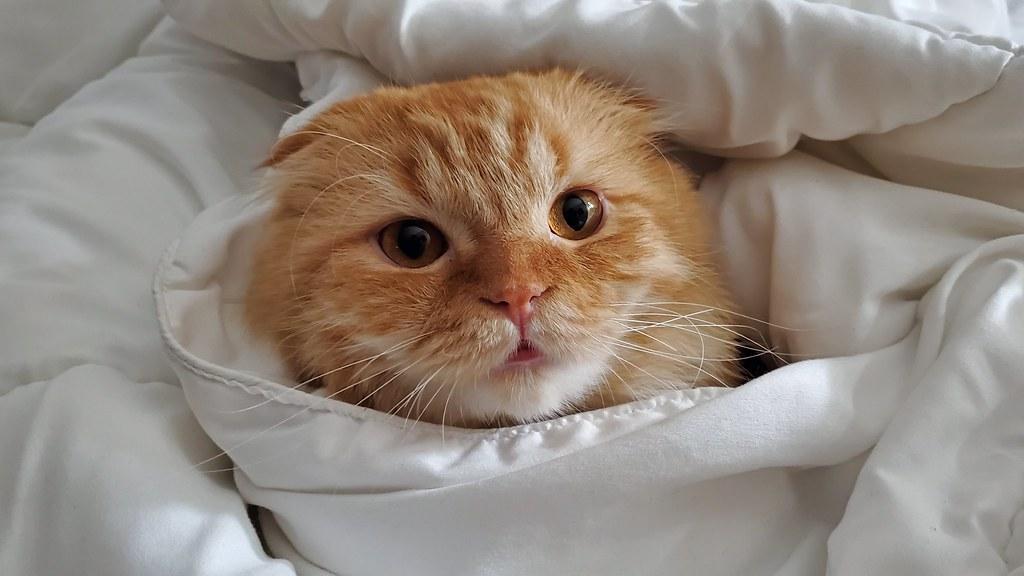 Pumpkin bundled in blankets