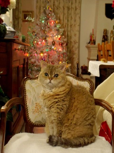 Eleonore: Merry Christmas 2020 !